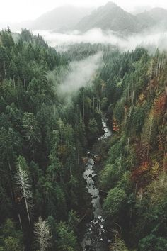 100 Forest Encounters for Dungeons and Dragons (DM Inspiration) - SoNoë - Nature travel Image Nature, All Nature, Beautiful World, Beautiful Places, Nature Aesthetic, Adventure Is Out There, Pacific Northwest, Dungeons And Dragons, Beautiful Landscapes