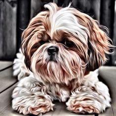 Discover Shih Tzu Cachorro Grooming Creativos y geniales Shi Tzu Girl Perro Shih Tzu, Shih Tzu Hund, Shih Tzu Puppy, Shih Tzus, Shitzu Puppies, Puppy Grooming, Puppy Drawing, Dog Memorial, Dog Portraits