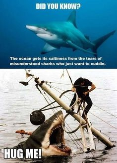 Did you know? the ocean gets its saltiness from the tears of misunderstood sharks who just want to cuddle? HUG MEEEEEEE!!!!!!!!