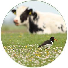 200.000 hectare bloemrijke weides, dat willen we. Met koeien én vogels.