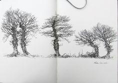 On peut également parcourir la campagne pour y trouver des arbres à dessiner . ça sert à rien , mais moi je trouve que c'est du luxe, de pouvoir faire des trucs qui ne servent à rien ;-)