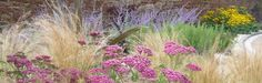 McQue Gardens an Edinburgh based garden design studio that offers a full garden design, planting and advice service for clients throughout Scotland
