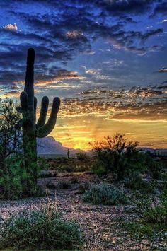 Beautful Sonoran Desert Sunrise