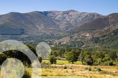 Oak woods and meadows in Garganta de los Caballeros, in the northen slope. Find all the information to plan your trip to #gredos in ww.qnatur.com