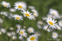 Serenbe Wildflowers.  Interested in commissioned fine art photography? Click here: photo.carlaroyal.... #fineartphotography #naturephotos