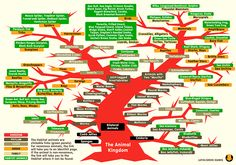 """Animal Classification """"Tree"""" with links"""