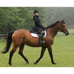 Asmar All Weather Rider™ | Dover Saddlery  (If I were a rich girl, nanananananana...)
