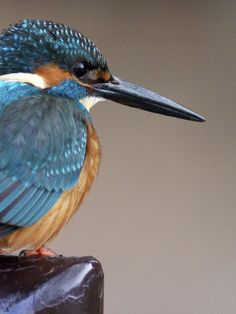 Kingfisher by Joe Motohashi on 500px
