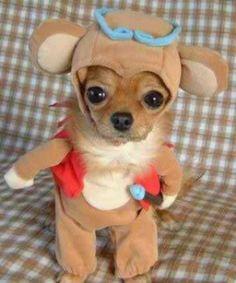 Perro gracioso