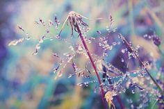 """conserva-tus-colores: """"Unas cuantas gotas… on Flickr. """""""