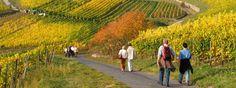 Wandern rund um Rüdesheim im Rheingau.    © Rüdesheim Tourist AG, Fotograf: Karl-Heinz Walter