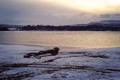 lake and log