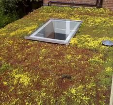 rooflight and green roof - Google Search