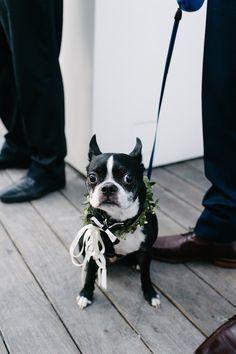puppy ring bearer | via: ruffled