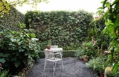 A tightly clipped creeping fig (Ficus pumila) provides a great backdrop to the garden. The white metal table originally belonged to David's grandmother, and the river stones in the dry stone wall were from his late Father's garden. Ficus Pumila, Small Flower Gardens, Little Gardens, Outdoor Plants, Outdoor Gardens, Courtyard Gardens, Outdoor Spaces, Outdoor Living, Fertilizer For Plants