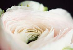 photography, flower, white, black,