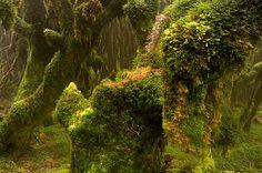 moss goblins | by Benjamin Burkhart
