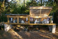 can I see pics of your setups? - Homesteading Today