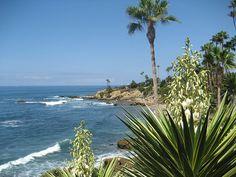 Surfing (well trying) in Laguna Beach, CA