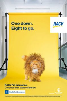 CHE Proximity breaks insurance clichés with RACV campaign – Marketing Communication News