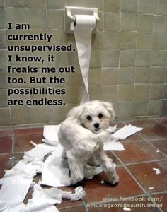 """I am currently unsupervised... I know, it freaks me out too. But the possibilities are endless!"" ~ Dog Shaming shame - too stinking cute"