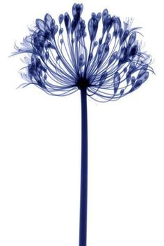 #so65 #nel blu dipinto di blu