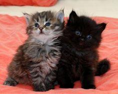 chatons trop mignons | Les chats mignons