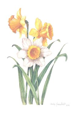 Daffodils 10 x 8 lithograph by CShoresInc on Etsy, $10.00