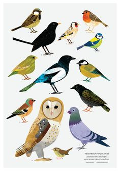 This print details some of my favourite neighbourhood birds and is available in or Perfect for children starting to spot birds, or for. Bird Poster, Bird Artwork, Guache, Love Illustration, Bird Drawings, Owl Art, Bird Prints, Beautiful Birds, Beautiful Pictures