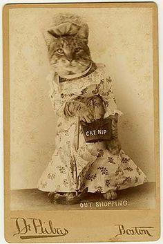 Shopping Cat