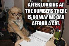 30 Funny animal captions - part 7 (30 pics)
