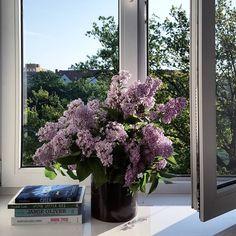 W domu, w którym nie ma dzieci, rano panuje zawsze taka absolutna cisza. I tylko śpiew ptaków ♥ #bez #lilac #wiosna #spring #myhome #myplace #słońce #poranek #morning #książki #books #cisza