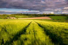 Windy barley - Schorisse, Belgium