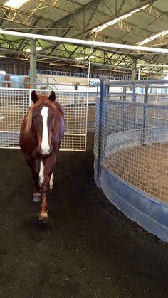Free style horse walker. Looovee iiittt