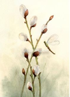 Pussywillow & Dragonfly Watercolor - Gayle Laible - PDF DOWNLOAD