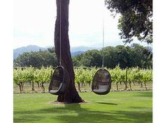 Egg chairs hanging at Cloudy Bay Vineyard New Zealand