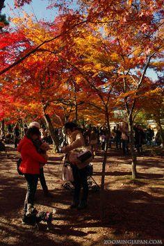 Tenryuji Temple's (Kyoto) beautiful autumn colors. (November 2012)