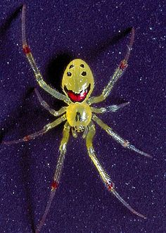 (© Dr. Geoff Oxford/Caters News) - smiling spider