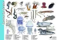 Herkenningskaart / zoekkaart Leven in de zee