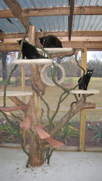 15 Outdoor Pet Projects You'll Lap Up - Michelle de Bree-Peake - 15 Outdoor Pet Projects You'll Lap Up Reader Pet Projects - I want to build this for my kitties! Diy Cat Enclosure, Outdoor Cat Enclosure, Pet Enclosures, Cat Jungle Gym, Outdoor Cat Tree, Cat Climbing Tree, Ugly Cat, Cat Run, Cat Playground