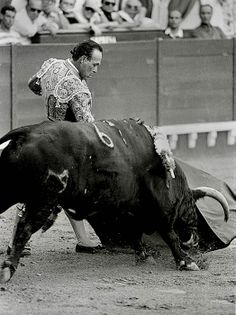 Andalucia, Cattle, Hobbies, Travel, Animals, Image, Running, Driveways, Dios