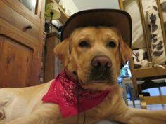 Tu perro puedes ser la portada de la Guia TravelGuau 2017 que presentaremos en FITUR