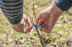 What Is Grafting Compound?