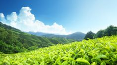 Relax and Unwind in Munnar  Mera Kerala