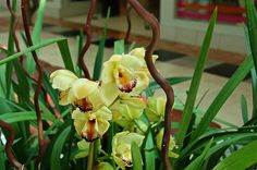 A gorgeous shot of orchids found inside Westfield Garden State Plaza!