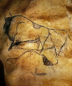 A Gallery of Cave Paintings from the Chauvet Cave as part of the Bradshaw Foundation France Rock Art Archive. The Chauvet Cave is one of the most famous prehistoric rock art sites in the world. Chauvet Cave, Lascaux, Paleolithic Art, Cave Drawings, Art Sites, Painting Gallery, Indigenous Art, Ancient Civilizations, Oeuvre D'art