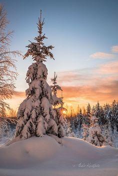Deep winter (Finland) by Asko Kuittinen Snow Scenes, Winter Scenes, Painting Snow, Deep Winter, Amazing Sunsets, Winter Photos, Winter Beauty, Life Is Beautiful, Snow