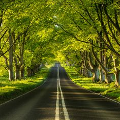 Beech Avenue ~ Dorset, England (Photo by Paul Wynn-Mackenzie) Beautiful Roads, Beautiful Landscapes, Beautiful World, Beautiful Places, Trees Beautiful, Beautiful Pictures, Tree Tunnel, Dorset England, Belle Photo
