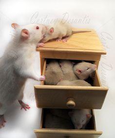 Dresser full of babies.