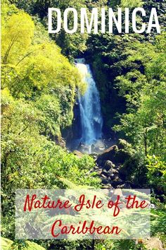 Dominica with kids: Nature Isle of the Caribbean - The World Is A Book